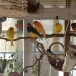 Gathering of sweet birds in aviary off dining room.  Wonderful canary serenade