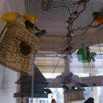Another view of aviary.  Notice complete with nesting spots.  Usually babes in