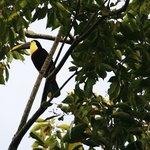 toucan spotted at Cerro Chato lodge