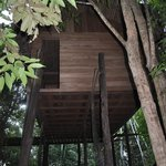 Tree house where you can fish in the flooded forest