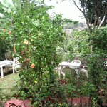 Toutes les plants son surveillés par son propriétaire, M. Alfonso.