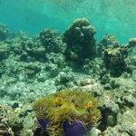 island reef