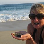 Baby Sea Turtle Release