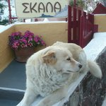 Entrance to Skala with our friendly watch dog