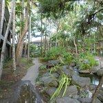 sample of tropical setting