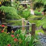 Award winning garden