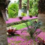 """Planting of """"Spanish Shawl"""""""