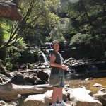 Aussie Summer at Liffey Falls