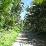 sightseeing in savaii, took a wrong turn somewhere?