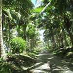 day trip in Savaii
