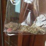 very noisy gecko in villa Bengi