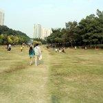 Fra parken