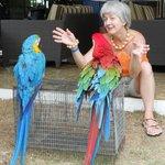 Беседа с отельными попугаями