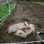 Pigglets at Play!