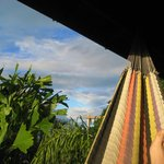 Vew from the hammock