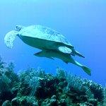 More turtle