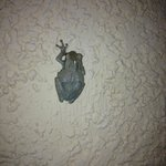 A frog we saw walking on the wall a night