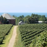 Lake Erie helps provide a grape growing climate!