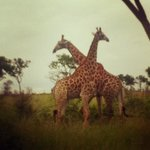 Game drive, day one!