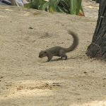 Ardilla en la zona de playa privada del hotel