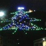 L'albero più grande del mondo !!!
