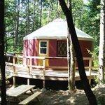 yurt Le Lièvre