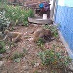 monkeys walk around