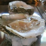 Oyster of the day