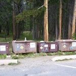 Lodge bear boxes along parking lot