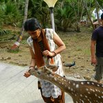 Travellar feeding a Deer