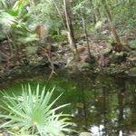 all'interno del villaggio c'e un cenote....una cosa fantastica