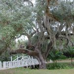 One of the bridges and a live oak
