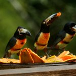 Enjoy these birds while having breakfast at Crystal Paradise