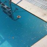 filthy, dangerous pools
