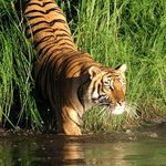 Home of Royal Bengal Tiger