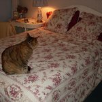 Jane Austen Room (with Shelley the Cat)