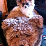 Fuzzy bear footstool