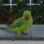 Small green parrots came to visit us on our terrace