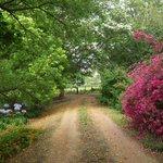 Lupus Den garden