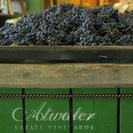 Photo de Atwater Estate Vineyards