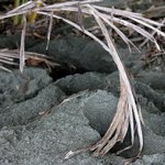 Sea Turtle Nest in Corcovado National Park