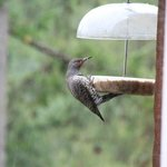 We are a great birding destination with forest, lake and meadow birds visiting us all year round