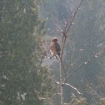Many birds of prey perch near our property.