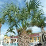beautiful palm on property