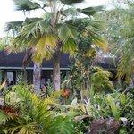 Beautiful Tropical Garden setting