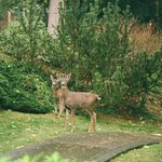 Deer enjoying the garden