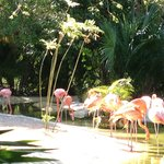 Flamingos in the sanctuary in The Grand Mayan