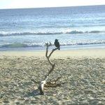 Elizabeth beach