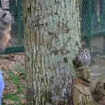 Owl education. Nice camoflage