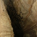 Bats near exit.